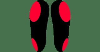 supinateur